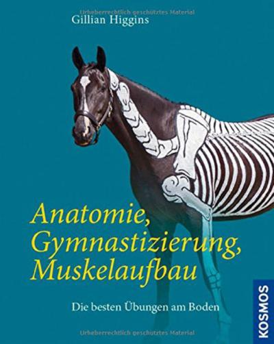 Anatomie-Gymnastizierung