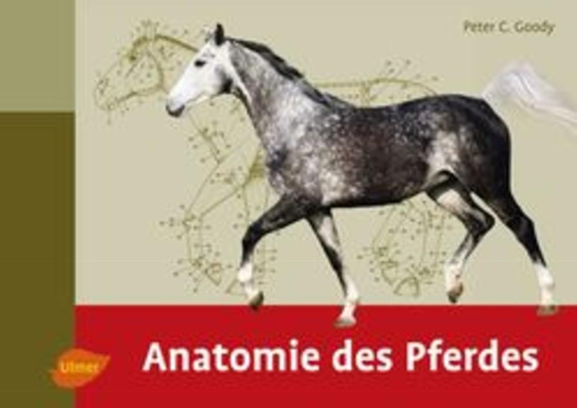 Niedlich Klinische Anatomie Des Pferdes Bilder - Anatomie Von ...