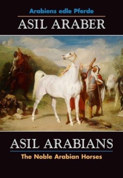 Asil Araber VI