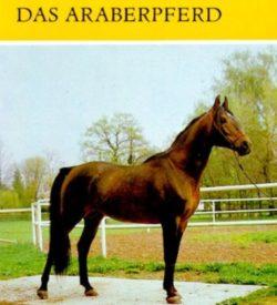 Das Araberpferd