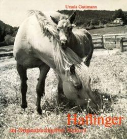 Haflinger im Originalzuchtgebiet Südtirol