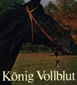 König Vollblut