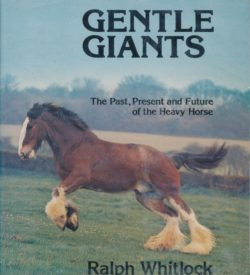 Gentle Giants Heavy Horse