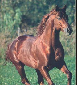 Le quarter horse américain