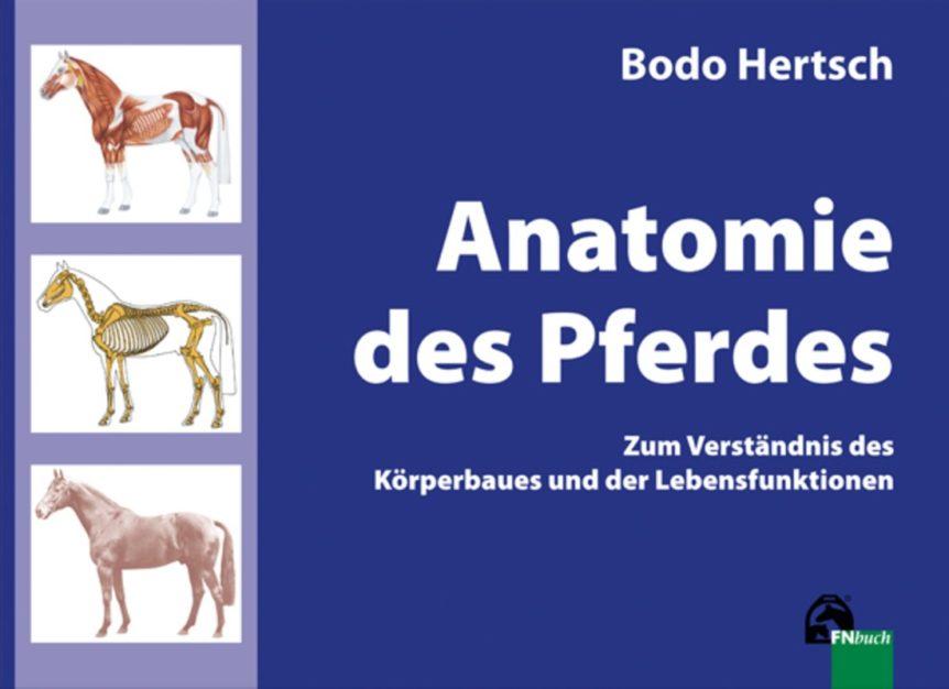 Anatomie des Pferdes