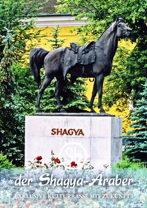 Der Shagya Araber