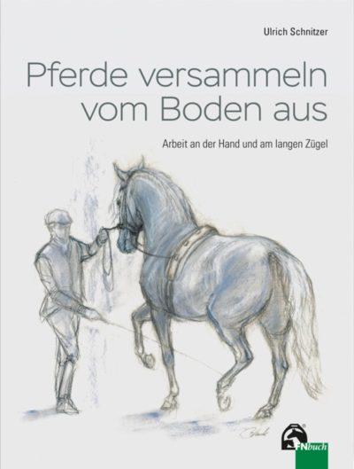 Pferde versammeln vom Boden aus