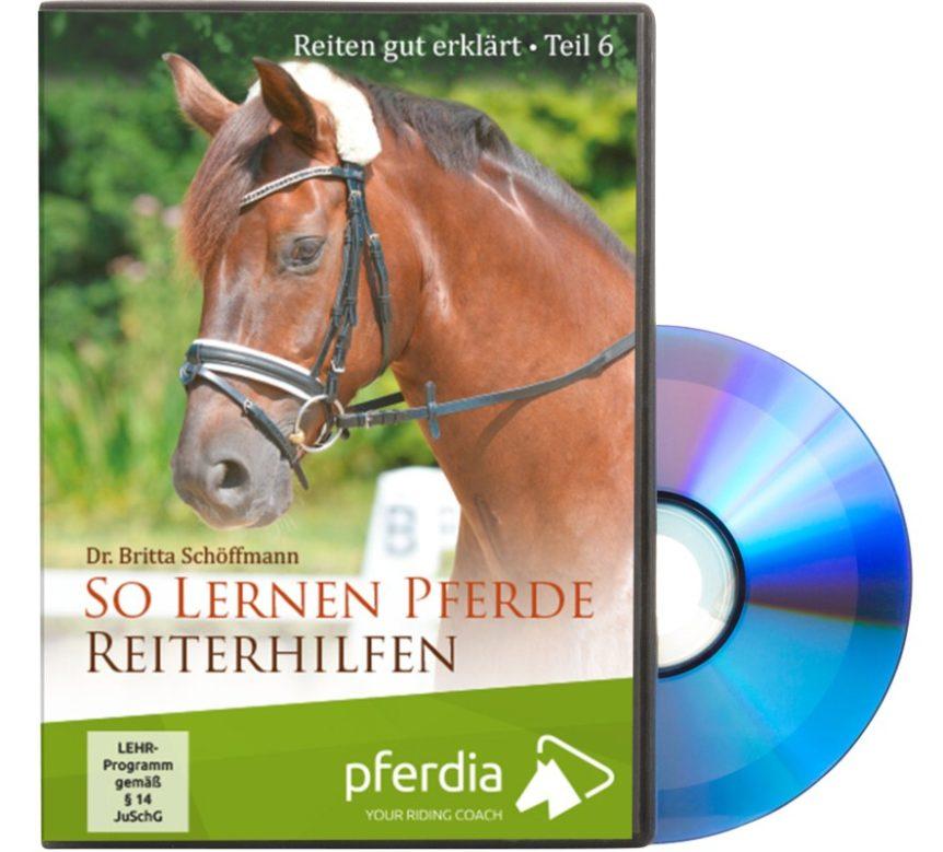 So lernen Pferde Reiterhilfen
