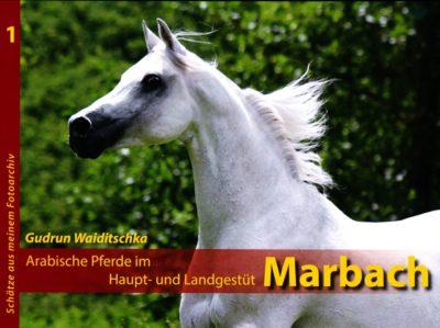 Arabische Pferde im Haupt und Landgestüt Marbach
